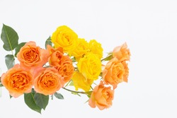 orange and yellow beautiful roses on white background