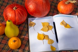 Orange and yellow pumpkins, yellow autumn leaves business planning notebook on a plaid blanket. The view from the top