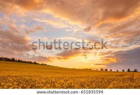 Orange and yellow sunset - colorful sky, clouds, flowering colza (coleseed) field. #651835594