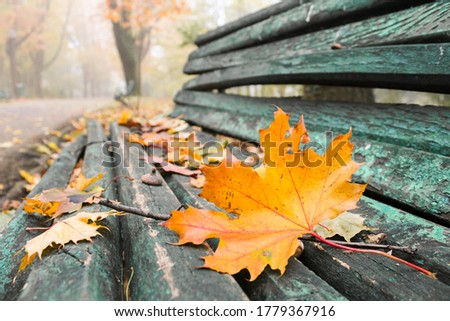 orange automn leaf on green bench with cracked paint, foggy background Photo stock ©