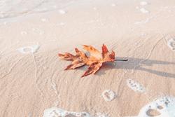 Orange autumn Maple leaf on the beach sand, autumn season concept