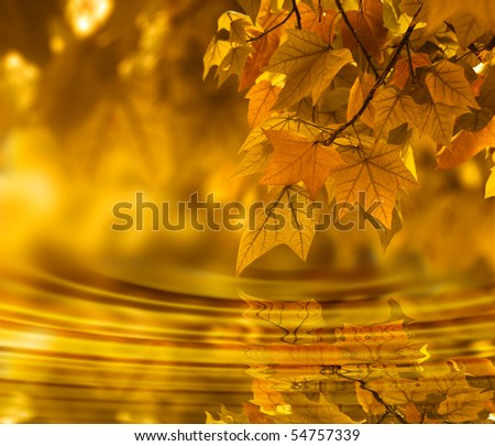 Orange autumn orange color background
