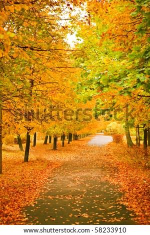 orange autumnal park - stock photo