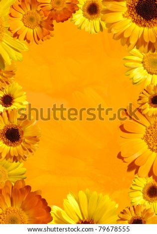Orange background framed with yellow wild daisy flowers