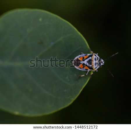 Orange, Black and White insect #1448512172