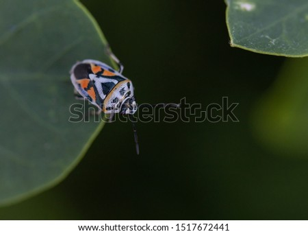 Orange, Black and White insect #1517672441