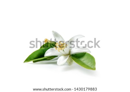 Orange blossom isolated on white background #1430179883