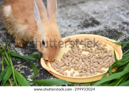 Orange brown rabbit is eating rabbit feed and grass. Professional dry pet food spread out in a plate with green grass