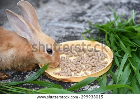 Orange brown rabbit is eating rabbit feed and grass.Professional dry pet food spread out in a plate with green grass