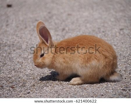 Orange bunny #621400622
