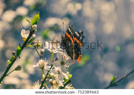 Orange butterfly and cherry blossoms