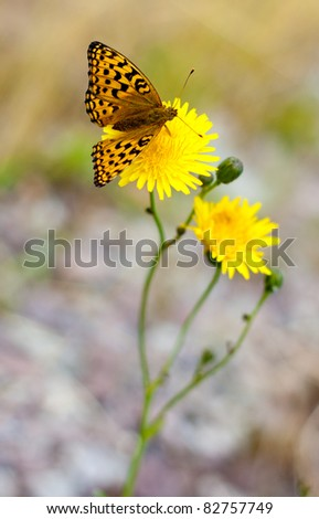 Orange butterfly on a flower
