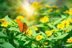 Orange butterfly on a yellows sunflower