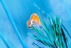 Orange butterfly on pine leaf blue background.