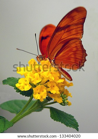 Orange butterfly on yellow flower
