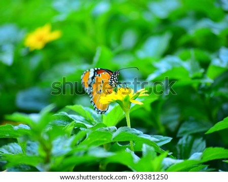 Orange butterfly on yellow flowers, background  green leaves in the park #693381250