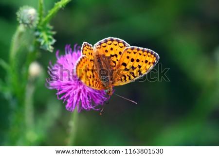 orange butterfly sitting on a purple flower
