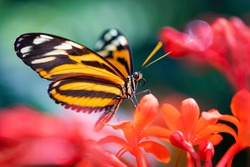 Orange Butterfly Sitting on a Red Flower