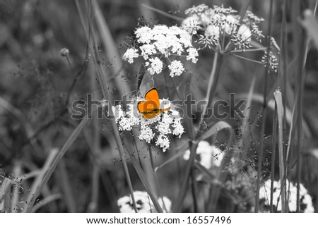 stock photo : orange butterfly to black and white backgrounds