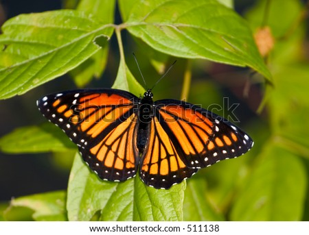 orange butterfly up-close