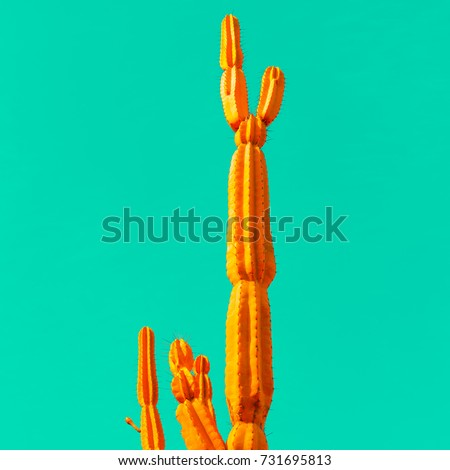orange cactus on blue. minimal...
