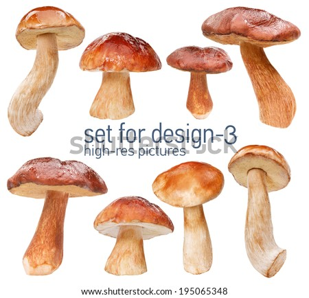Orange cap boletus - gustable edulis isolated on white background with set for design  Foto stock ©