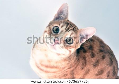 Orange cat #573659725
