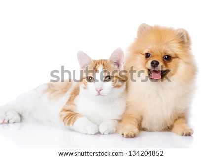 orange cat and dog. dog looking at camera. isolated on white background