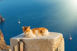 Orange cat basks in the sun on the sea background