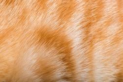 Orange cat fur. Tiger pattern fur.