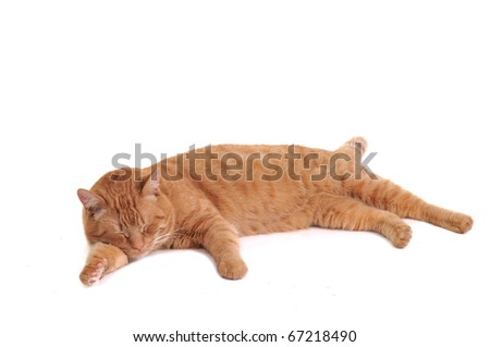 Orange cat is having a nap comfortably lying isolated on white background