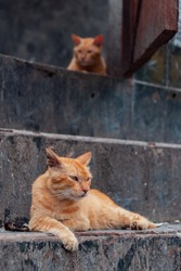Orange Cat Is Relaxing On The Stairs