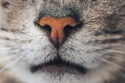 Orange cat nose macro shot