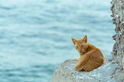 Orange cat rests and watches on a cliff by the sea