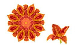 Orange circular floral pattern isolated on white background. Kaleidoscope. Flower day lily