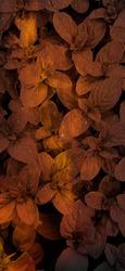 orange color light with leaf texture