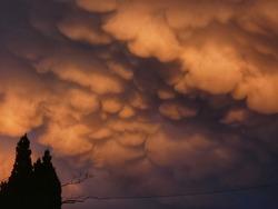 Orange coloured Mammatus clouds with tress