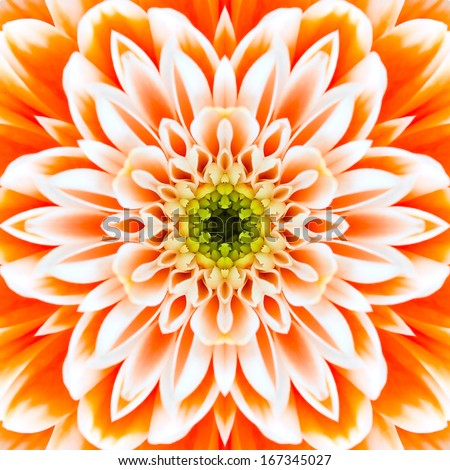 Orange Concentric Flower Center Macro Close-up. Mandala Kaleidoscopic design
