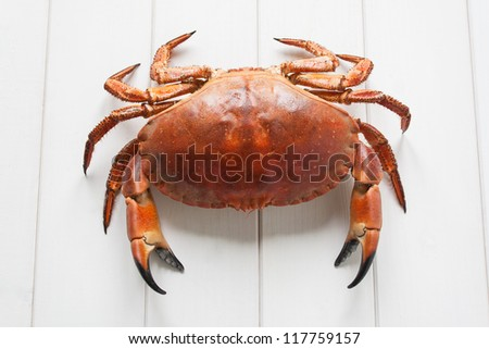 Orange Crab on white wood table background