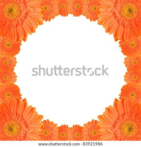 orange daisy-gerbera flowers create a circular frame on white background