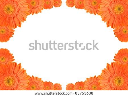 Orange daisy-gerbera flowers create a frame on white background