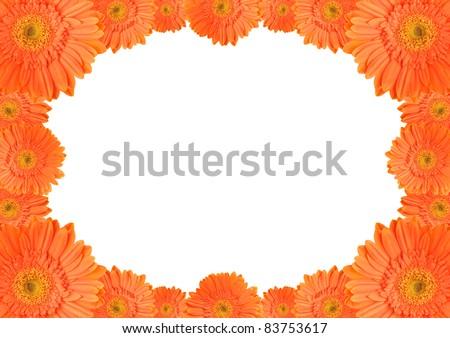 Orange daisy-gerbera flowers create an oval frame on white background