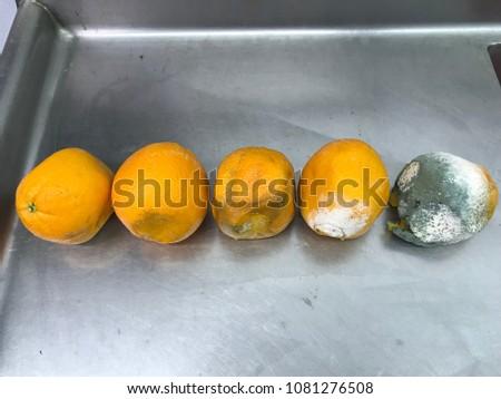 Orange decomposition process rotten orange
