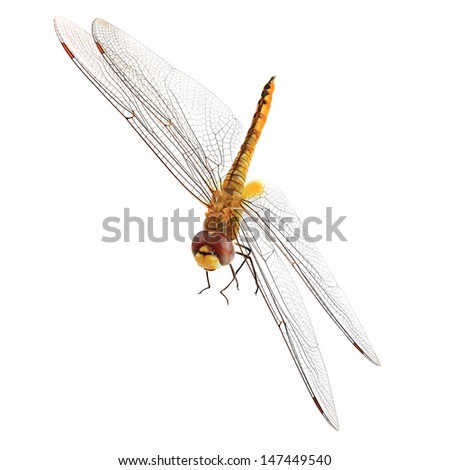 Orange Dragonfly with Red Eyes isolated on white