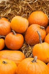 Orange edible pumpkins on straw