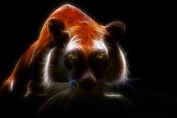 Orange eye tiger looking