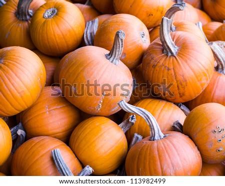Orange Fall Pumpkins
