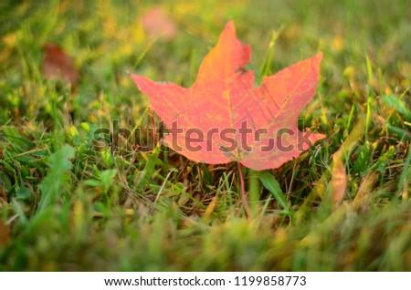 Orange Fallen Leaf #1199858773