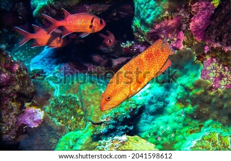 Orange fish among underwater corals. Underwater coral fishes. Coral fishes underwater