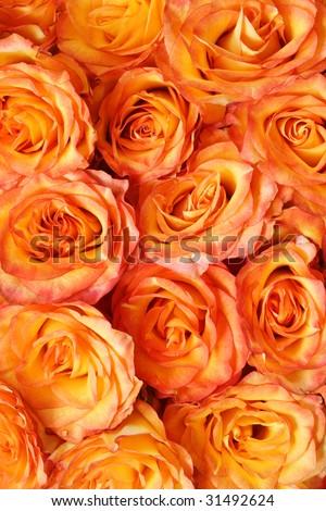 Orange floral background pattern. Beautiful orange roses.